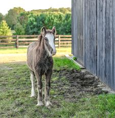 Free Brown And White Horse Walking Near Gray Wooden Shed Royalty Free Stock Photos - 128558108