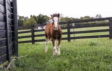 Free Brown And White Horse Standing On Green Grass Stock Images - 128558134