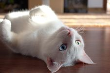 Free Close-Up Photo Of Kitty Laying On Floor Royalty Free Stock Photos - 128558288