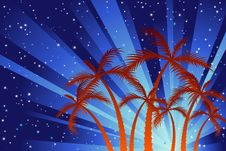 Free Palm Trees Royalty Free Stock Images - 12861549