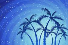 Free Palm Trees Royalty Free Stock Photo - 12861835