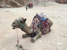 Free Camel, Camel Like Mammal, Arabian Camel, Mode Of Transport Royalty Free Stock Photography - 128612177