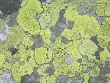 Free Vegetation, Grass, Biome, Map Stock Photos - 128612943
