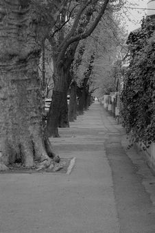Free Tree, Black And White, Woody Plant, Monochrome Photography Stock Photos - 128613713
