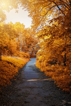 Free Photo Of Path In-between Woods During Autumn Stock Image - 128687341