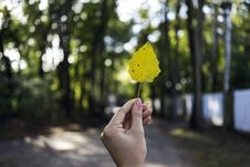 Free Close-Up Photo Of Person Holding Leaf Royalty Free Stock Image - 128687646