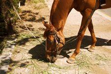 Free Horse, Fauna, Horse Like Mammal, Horse Tack Stock Photography - 128952152