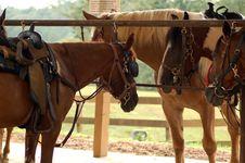 Free Brown Horses Stock Image - 1291911