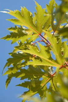 Autunm Leaves Under The Sun Royalty Free Stock Images