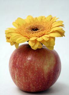 Free Apple Flower Royalty Free Stock Photo - 1294985