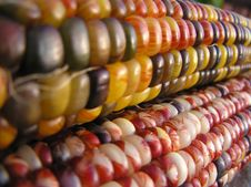 Free Indian Corn Lines Royalty Free Stock Photos - 1295958