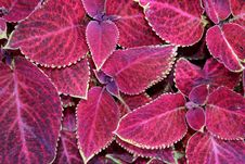 Free Colourful Leaves Royalty Free Stock Photo - 1296215
