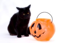 Free Curious Black Kitten And Candy Pumpkin. Royalty Free Stock Images - 1296629
