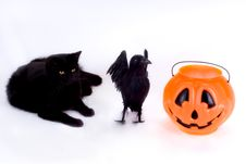 Free Black Cat, Raven And Candy Pumpkin. Royalty Free Stock Photography - 1296637