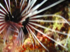 Free Sunfish Blurs Royalty Free Stock Image - 1296996