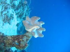 Free Underwater Mushroom Royalty Free Stock Images - 1297089