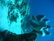 Free Blue Mushrooms Stock Image - 1297101