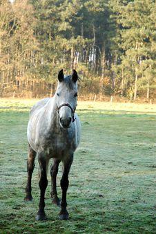 Free White Horse Stock Photo - 1297420