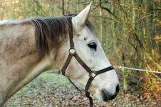 Free White Horse Royalty Free Stock Photo - 1297425