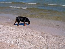 Free Dog On Beach In Gills Rock Wisconsin Royalty Free Stock Images - 1297729
