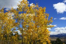 Free Yellow Aspens Above Mountain Valley Royalty Free Stock Photography - 1298287