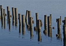 Free Pilings Stock Image - 1298451