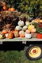 Free Pumpkins On Display Royalty Free Stock Photos - 12906078