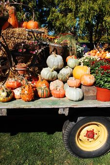Free Pumpkins On Display Royalty Free Stock Photos - 12906078