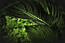 Free Shallow Focus Photography Of Green Plant Leaves Royalty Free Stock Images - 129026959