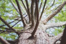 Free Selective Focus Photo Of Brown Tree Trunk And Branches Royalty Free Stock Photo - 129027465