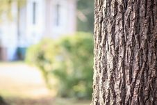Free Brown Tree Trunk Stock Photo - 129027630
