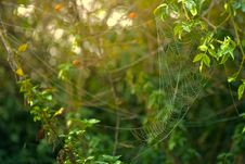 Free Spider Web Formed On Green Leaves Royalty Free Stock Photo - 129027685