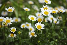 Free Selective Focus Photo Of White Petaled Flowers Stock Photos - 129028293
