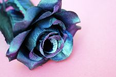 Free Blue And Purple Silk Rose Flower On Pink Surface Stock Photos - 129029213
