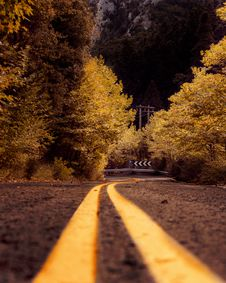 Free Sepia Photography Of Asphalt Road In Between Trees Royalty Free Stock Photography - 129056617