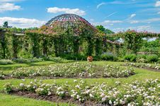 Free Garden, Botanical Garden, Plant, Vegetation Stock Image - 129084541
