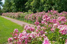 Free Flower, Plant, Garden, Botanical Garden Royalty Free Stock Image - 129085116