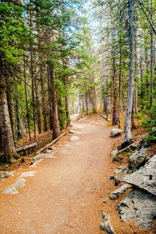 Free Path, Wilderness, Tree, Trail Stock Image - 129192681
