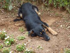 Free Dog, Dog Like Mammal, Dog Breed, Dog Breed Group Stock Image - 129192871