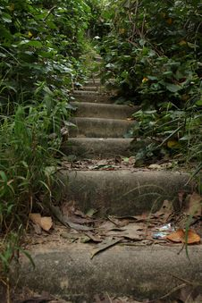 Free Vegetation, Path, Nature Reserve, Water Royalty Free Stock Photo - 129193755