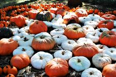 Free White And Orange Pumpkins On Ground Royalty Free Stock Photos - 129227428