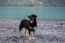 Free Adult Black And Tan German Shepherd On Focus Photo Stock Photo - 129228020