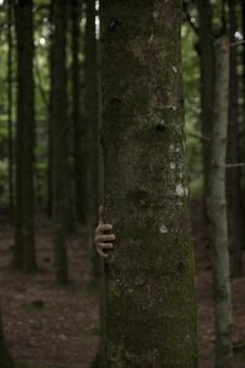 Free Person Hiding Behind Tree Trunk Stock Photography - 129228112