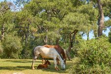 Free White And Brown Horses Eating Grass Royalty Free Stock Photography - 129228717