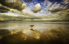 Free Dog Running On Seashore Under Blue Sky And White Clouds Stock Photography - 129228742