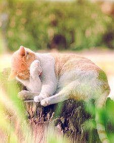 Free Tilt Shift Lens Photography Of Orange Tabby Cat Royalty Free Stock Images - 129229169