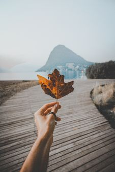 Free Person Holding Brown Leaf Stock Photos - 129229173