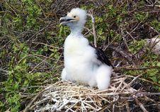 Free Bird, Fauna, Beak, Seabird Stock Photos - 129291453