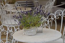 Free Flower, Purple, Flower Arranging, Lavender Royalty Free Stock Image - 129291646