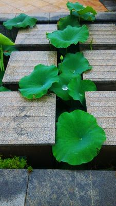 Free Green, Leaf, Plant, Aquatic Plant Stock Photo - 129291760